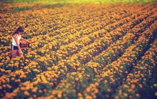 Colors, de Álvaro Bolivar, ganadora del 3º concurso fotográfico de la Batalla de Flores